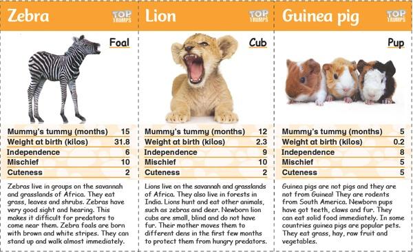 Image of: Cute Baby Top Trumps Cards Screenshot Onestopenglish Top Trumps Baby Animals Onestopenglish